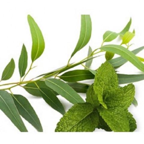 Aroma - Diffuser Oil Mint & Eucalyptus