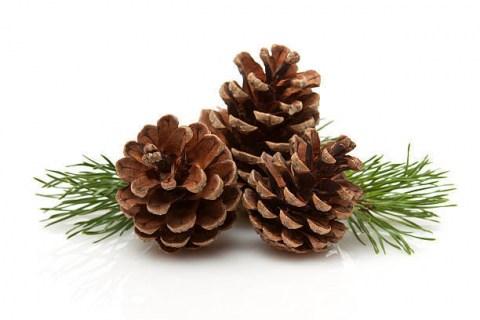 Aroma - Diffuser Oil Pine & Cedar (Πεύκο & Κέδρος)