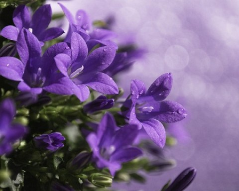 Aroma - Diffuser Oil Violet